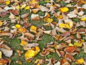 Cafaggiolo-Dead_leaves
