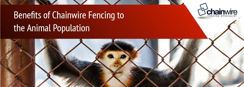 Benefits of Chainwire Fencing to the Animal Population - Fencing Specialists