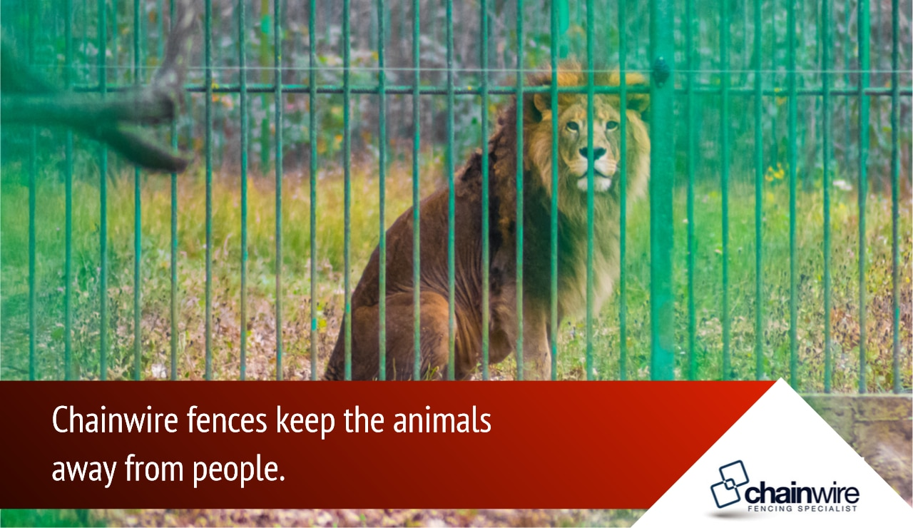 Benefits of Chainwire Fencing to the Animal Population - Chainwire Fencing